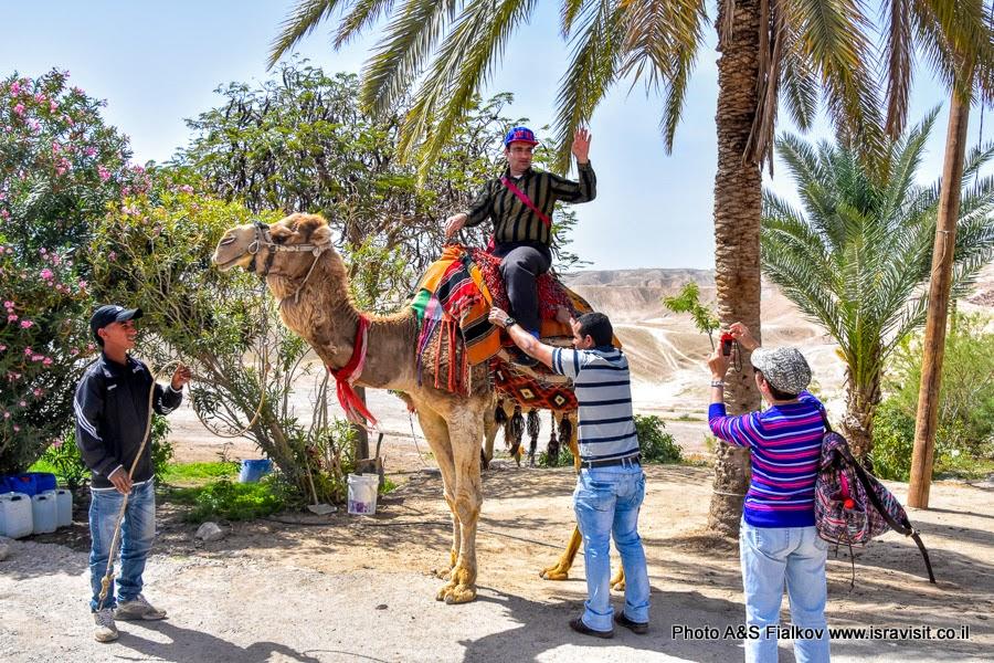 Экскурсия в Иудейской пустыне.
