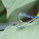 blue-eye, couple