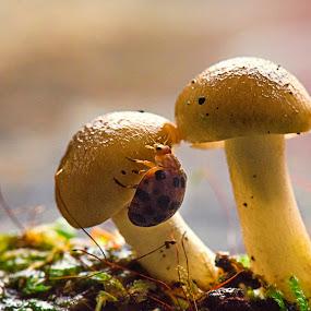 Sliding by Anton Subiyanto - Nature Up Close Mushrooms & Fungi ( mushroom, macro, fungi, nature, micro, insect, close up )