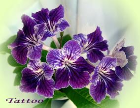 Photo: Tattoo