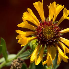 Flower by Fabienne Lawrence - Uncategorized All Uncategorized ( nature, yellow, flower )