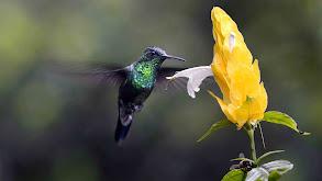 The Hummingbird's Quest thumbnail