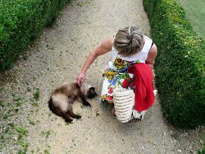 Photo: ma patronne adore les chats