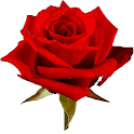 🌹 Roses 🌹 Autocollants (WAStickerApps) icon
