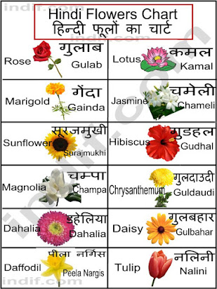 Essay On Daisy Flower In Hindi