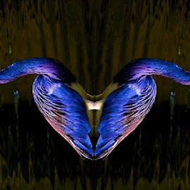 Valentine's Day Purple Heart  by Keith Lowrie - Digital Art Animals