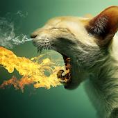 flame cat live wallpaper