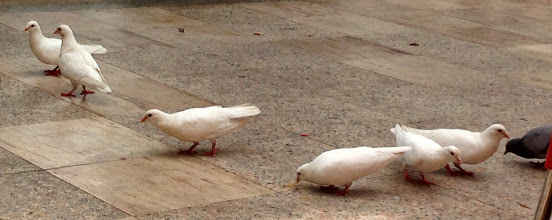 Photo: Aguilas doves get cake!
