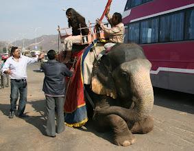 Photo: Samoin norsuja