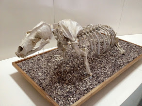Photo: Ex-Sea Lion