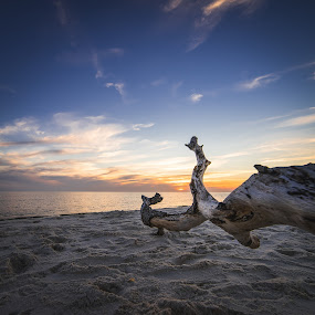 Driftwood by John Smith - Landscapes Sunsets & Sunrises ( clouds, sand, sky, wood, florida, sunset, gulf, branch, ocean, beach )
