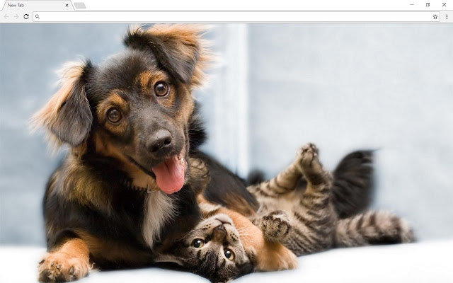 Cats and Dogs Backgrounds & New Tab