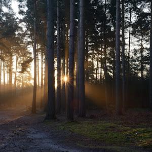 Sunrise forest_0.JPG