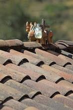 """Photo: Los toritos. Comunidad de Siwa """"Alturas"""" del valle del Urubamba"""