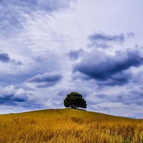 on the top by Marjan Gresl - Uncategorized All Uncategorized ( hill, nature, grass )