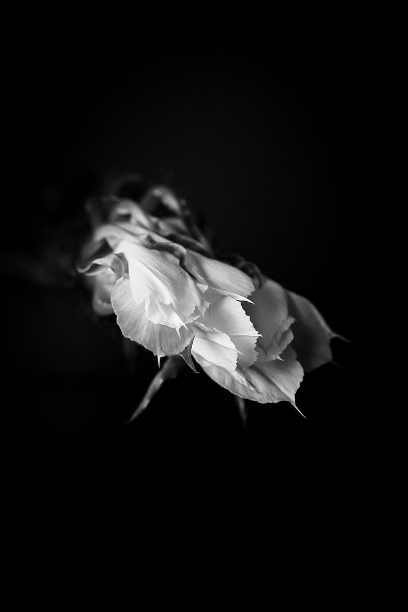 La luce nel buio di Saids_Gnr