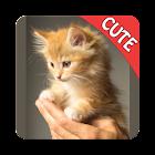 可爱的猫记忆配对游戏 icon