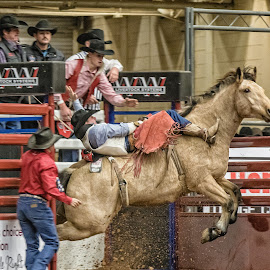 Bronco Busting by Christopher Winston - Sports & Fitness Rodeo/Bull Riding ( cowboy, skill, horse, sports, rodeo, bronco, competition, animal )
