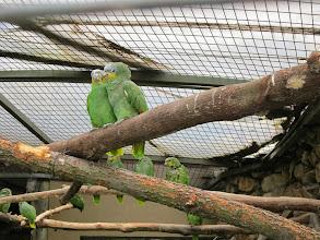 Photo: Parrots