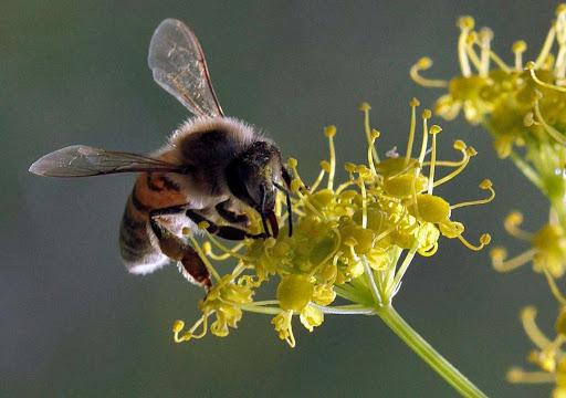 Nen hay khong viec cho tre so sinh su dung mat ong - Hinh 3