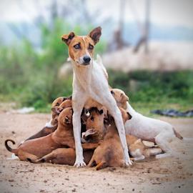 Motherhood by Sandeep Das - Animals - Dogs Puppies ( maternity, amenheteop, motherhood, sandeepfx )
