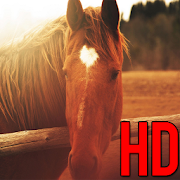 Free Horse Wallpaper : Horse Wallpapers