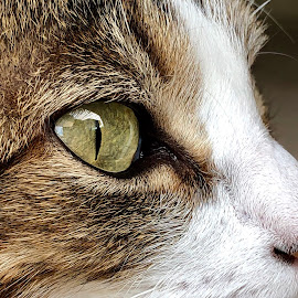 Up close and personal by Aliza Visagie - Animals - Cats Portraits ( #portrait #cat #animal #eye #pet #family #kids #face )
