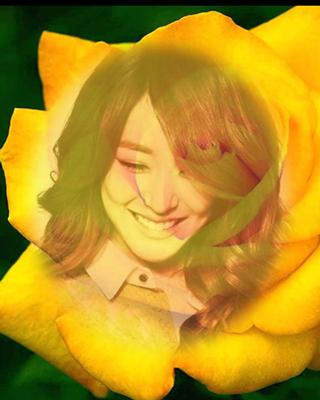 yellow rose flower frame