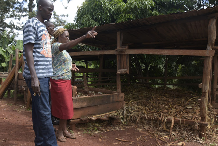 Gabriel Kimani and Jane Waithera in Ngorongo village where thugs invaded and stole a cow.