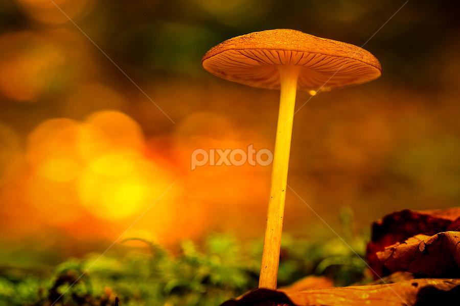 All light on me by Peter Samuelsson - Nature Up Close Mushrooms & Fungi ( fungi mushroom )