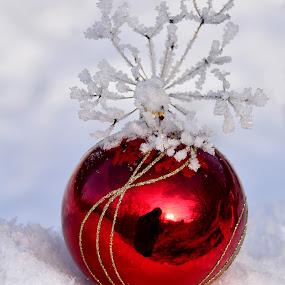 by Eugenija Seinauskiene - Public Holidays Christmas (  )