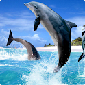 Dolphins 1 live wallpaper icon