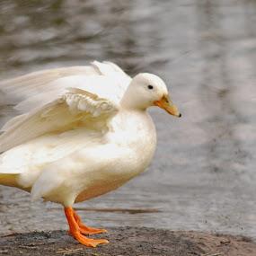 by Jade Bracke - Animals Birds (  )