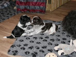 Photo: Morgens kurz nach 6 in der Winkelgasse - bei Spiellaune ist Erna und Toffie die Uhrzeit egal :)