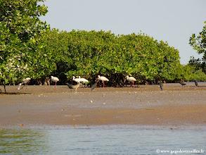Photo: #018-L'île aux oiseaux