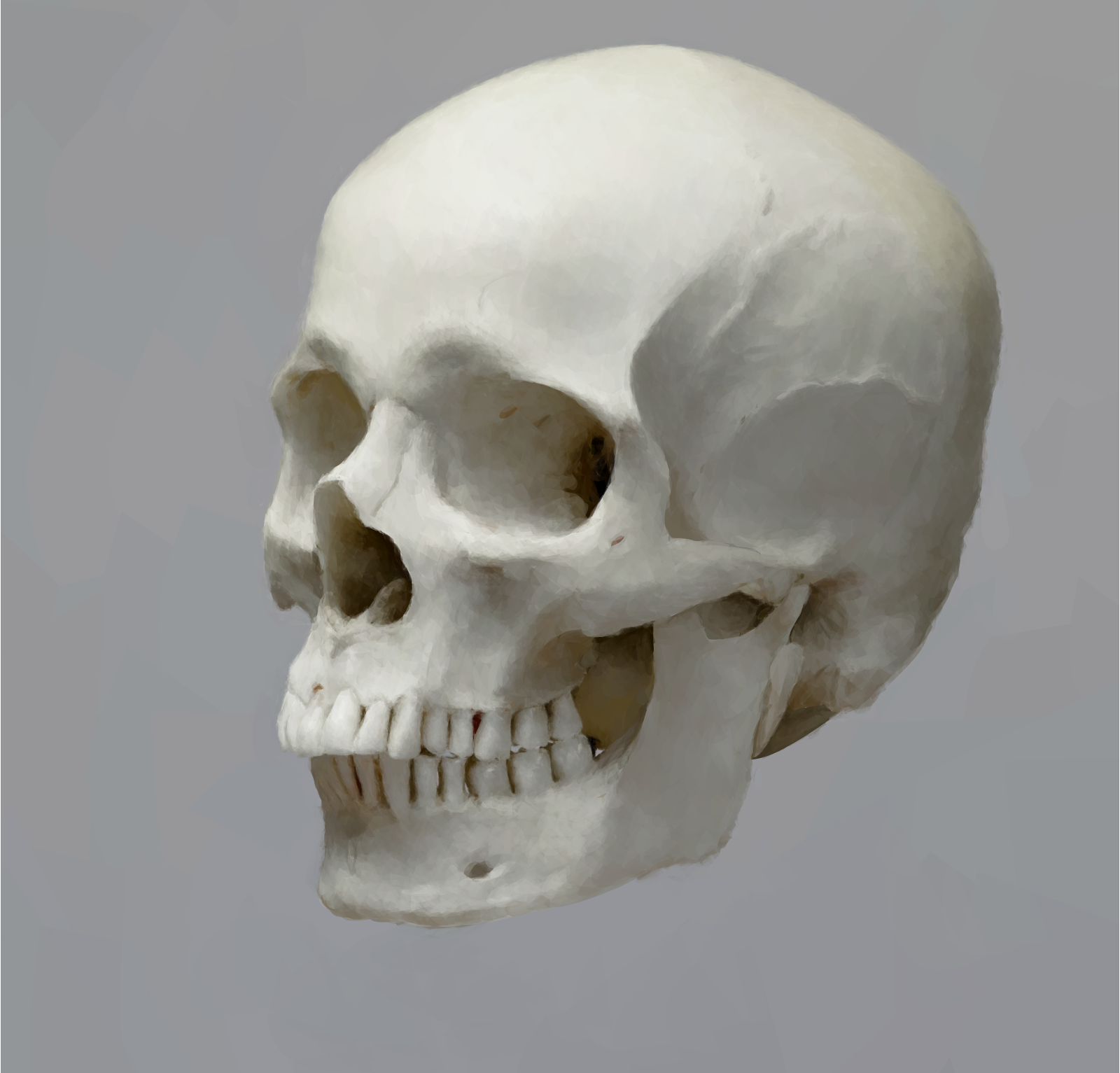 skull 16 drawings sketchport