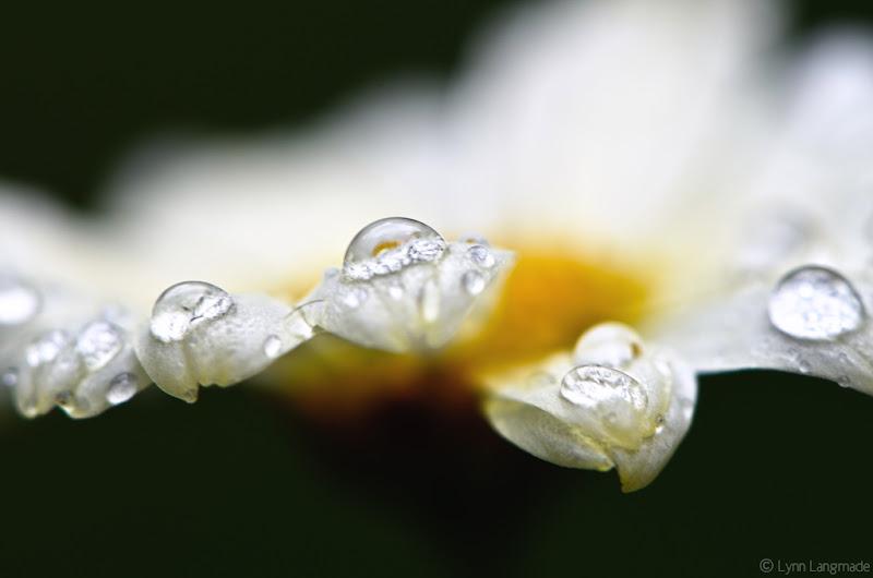 "Photo: ""Winter Jewels"""