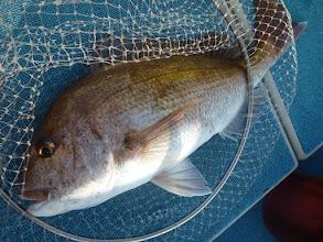 Photo: デカッ! 産卵シーズン終わってスリムですが 長さはある真鯛です!