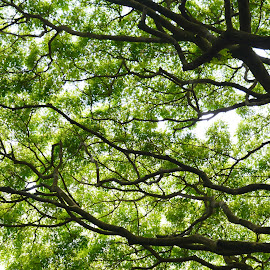 Canopy Green by Beth Bowman - Nature Up Close Trees & Bushes (  )