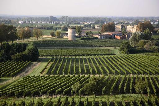 France-Bordeaux-Bourg-vineyard.jpg - The Bordeaux region of France is known for it fine wines and beautiful countryside. Visit the Bourg winery to taste their best.