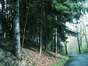 Photo: I do enjoying walking and taking photos of the woods. Here's a late winter walk in North Seattle.