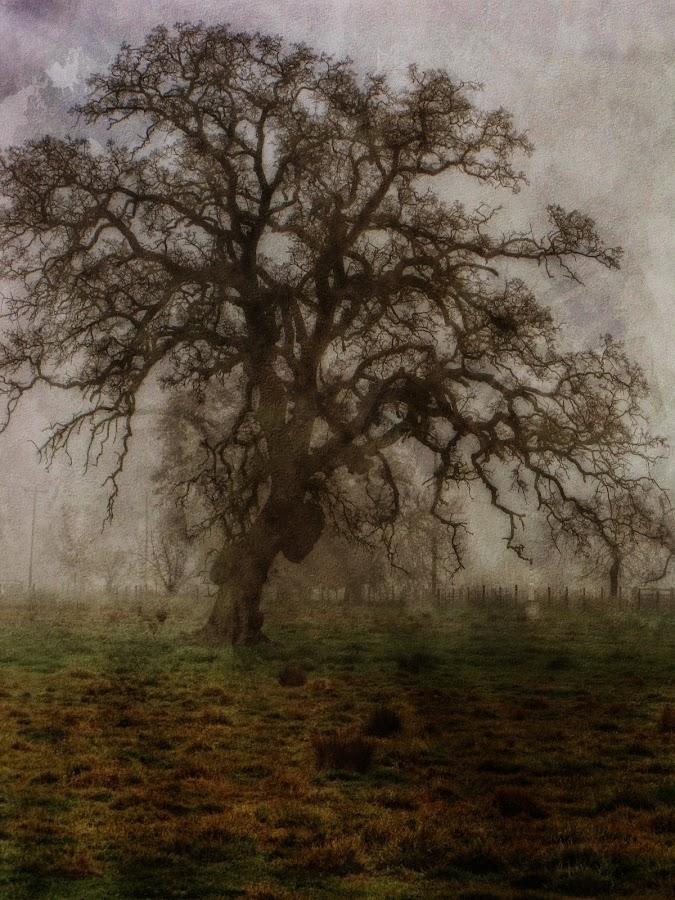 by Melissa  Zahorodny - Landscapes Prairies, Meadows & Fields