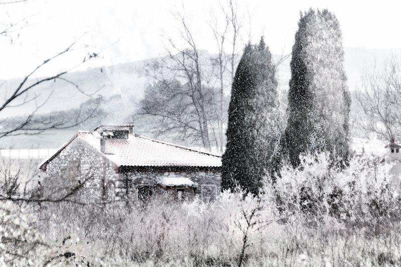 Gennaio nel bosco di nadia-ciube-borghi