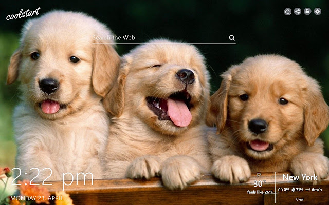 Cute and Funny Puppies HD Wallpapers Theme