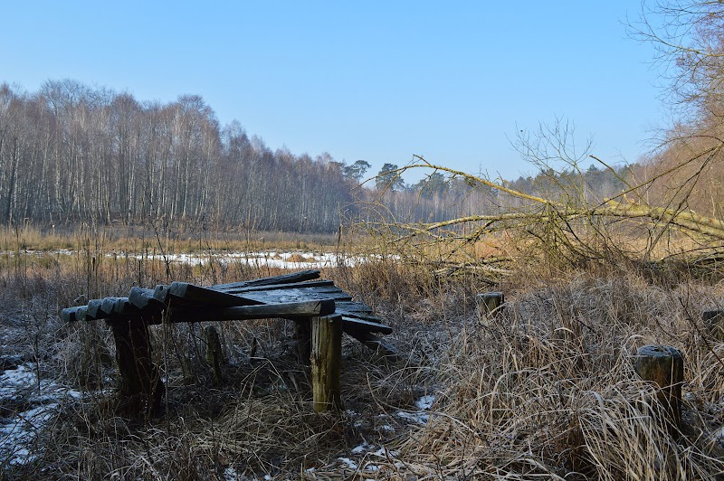 [Fot. 24] Jezioro Jeziórca Głęboka | Wygoda (gm. Wielka Nieszawka, pow. toruński), 2017