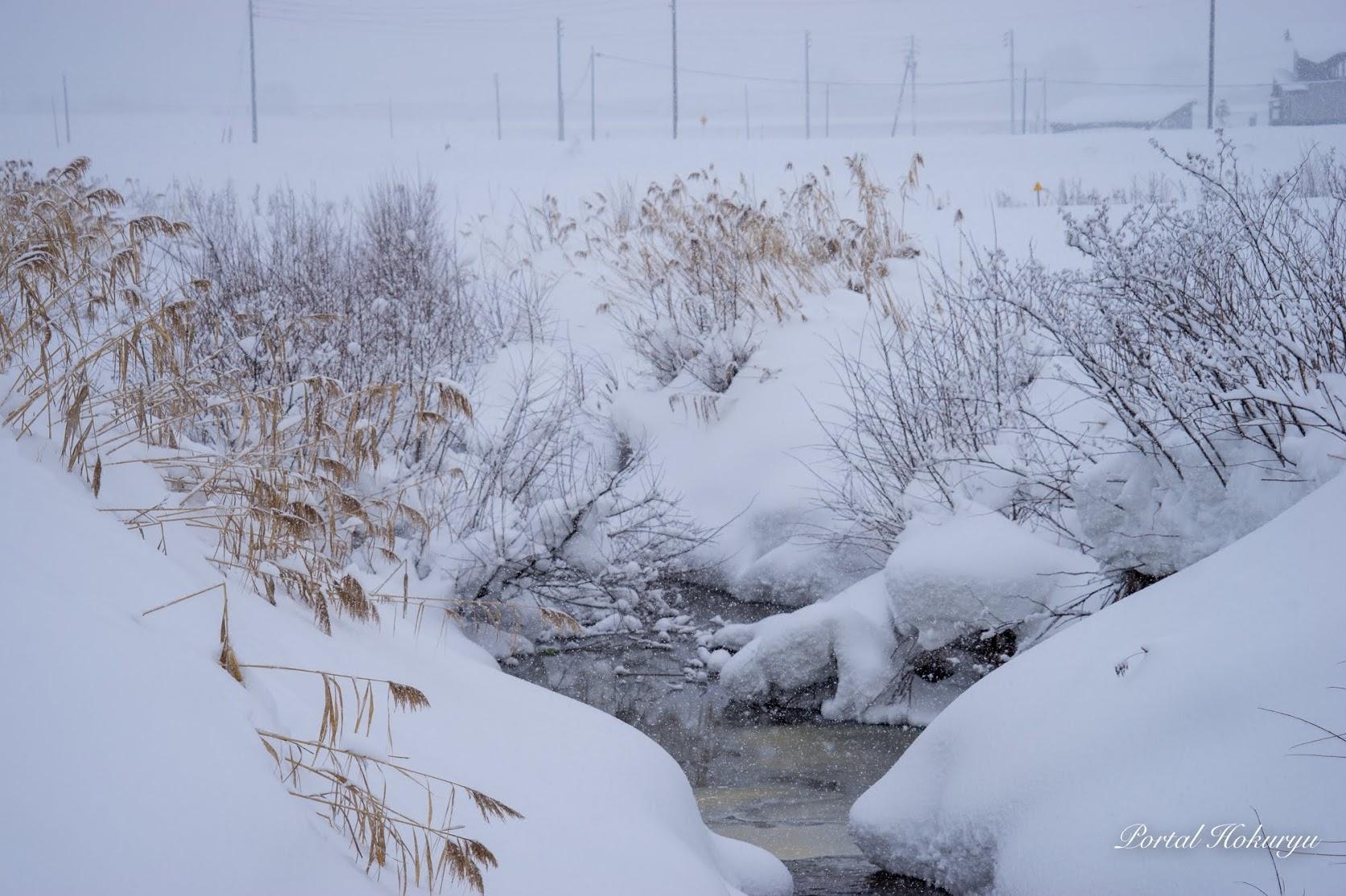 川辺に降り積もる雪