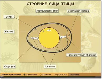 Описание: Строение яйца птицы