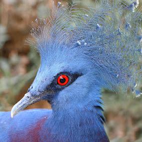 by Liang Deoz - Animals Birds