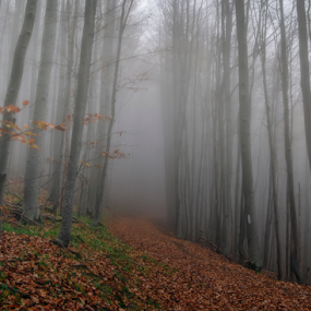 Mystery forest by Roberto Sorin - Nature Up Close Trees & Bushes ( up close, sopinel, roadfog, grass, magura, romania, forest, landscape, close up, sorin, red, nature, tree, autumn, color, fall, outdoor, mistyfog, opreanu, light,  )