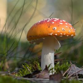 Fungus by Natasja and Martijn - Nature Up Close Mushrooms & Fungi ( mushroom, macro, autumn, forest, fungus )